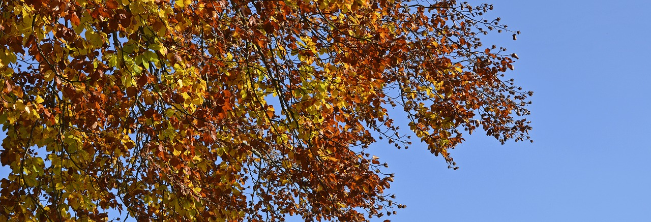 Autumn Tree Banner
